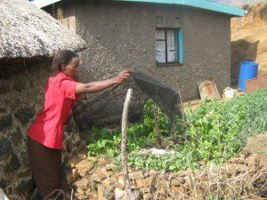 Makuema in ihrem Keyhole-Garten. (c) DRK/ Khauhelo Heshepe
