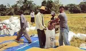 Bauern auf dem Feld schütten ihre Ernte in Säcke