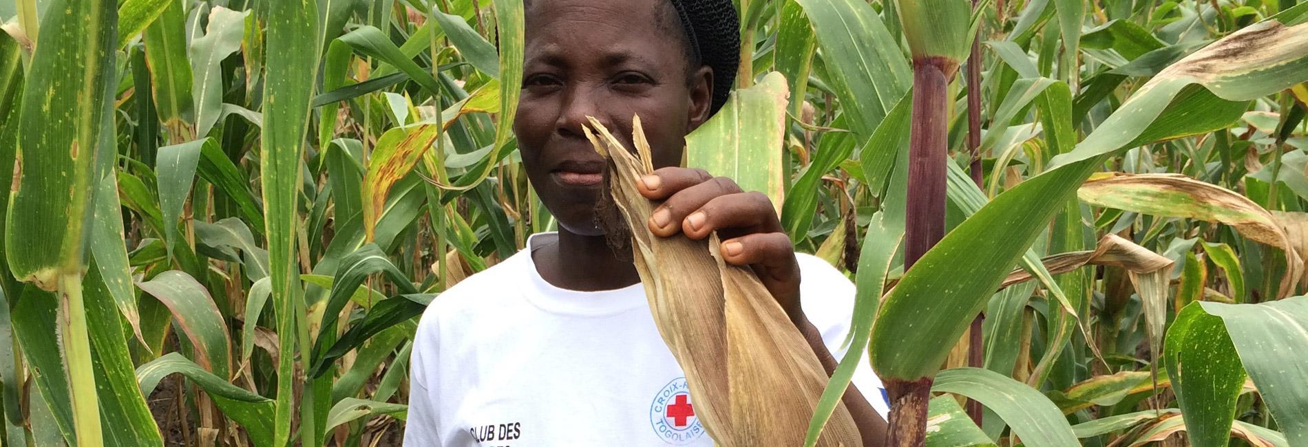 Foto: togolesische Frau in einem Maisfeld