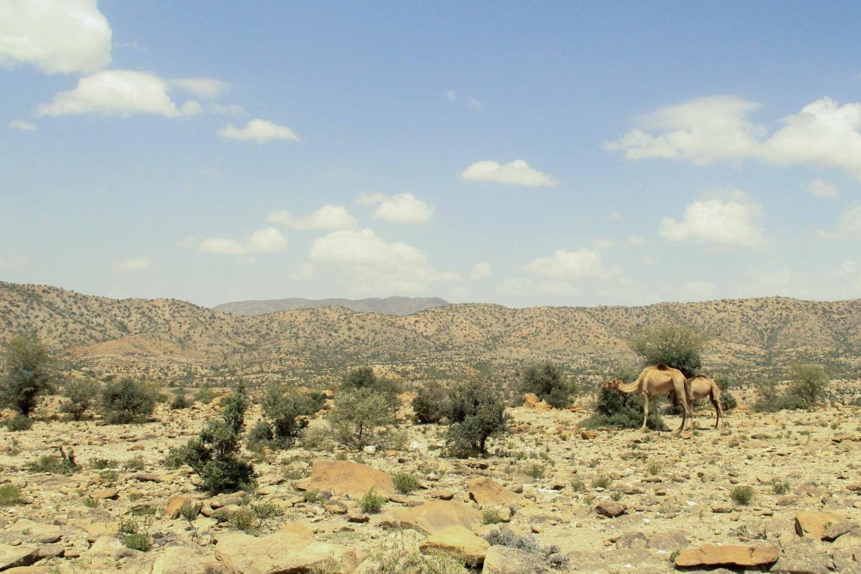 Foto: karge Landschaft