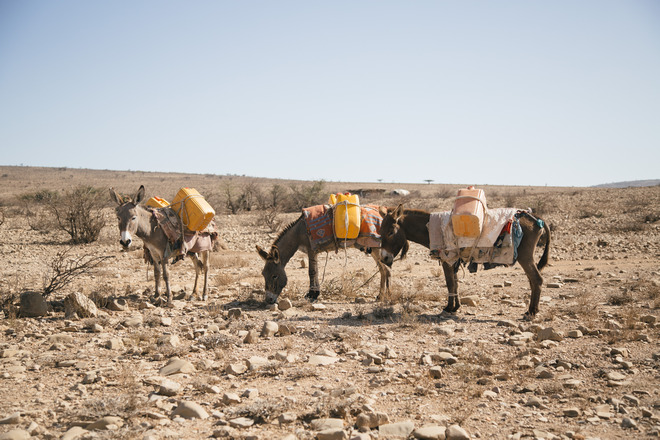 Es wird immer schwieriger, nach drei Jahren Dürre genug Wasser und Futter für die Tiere zu finden Foto: Tatu Blomqvist / Finnish Red Cross