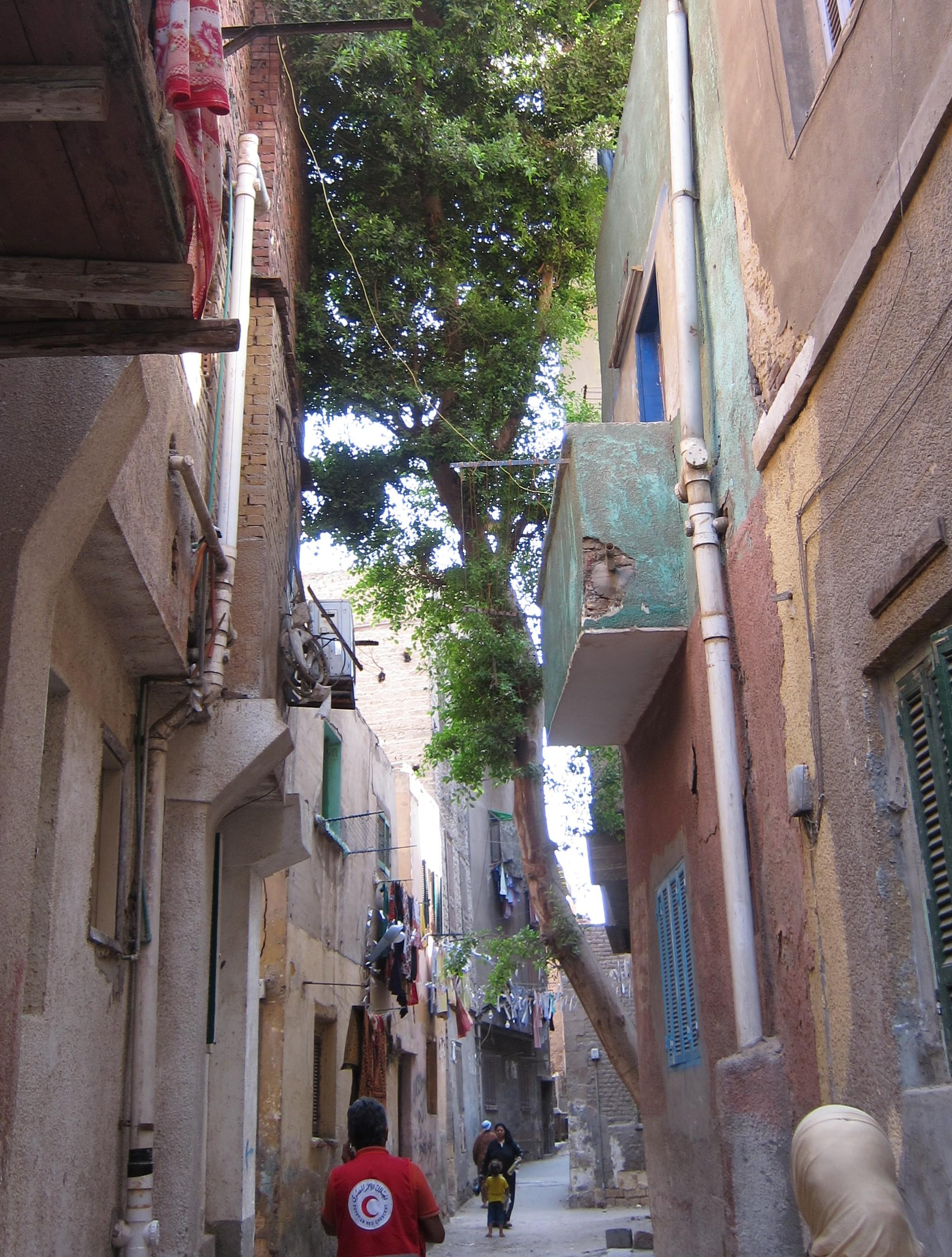 Straßenbaum in Kairo