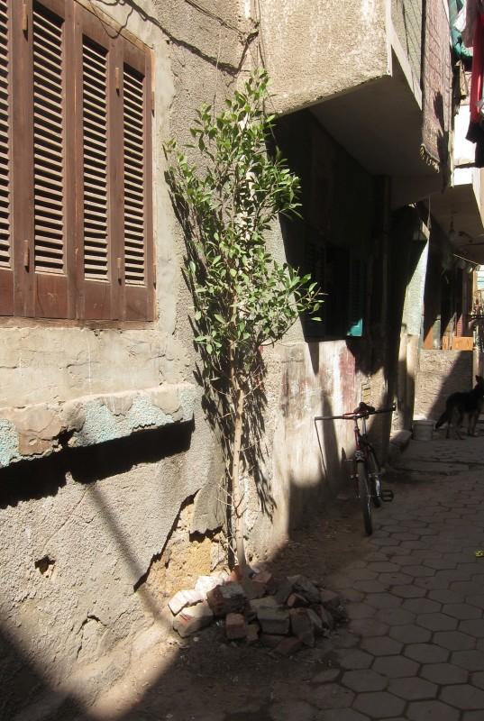 Kleiner Straßenbaum