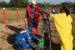 Foto: Rotkreuzmitarbeiter pflanzen einen Baum in Kolumbien