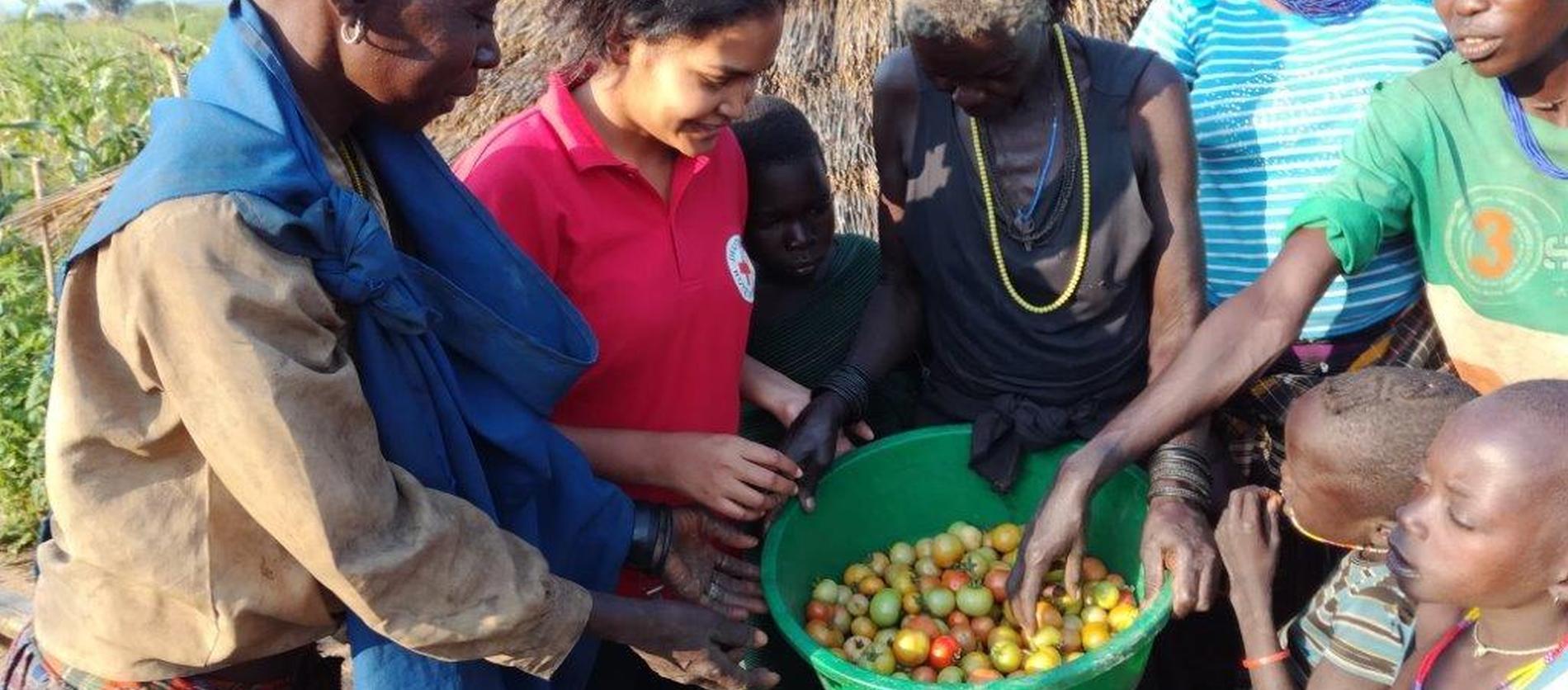 Gruppe mit geernteten Tomaten