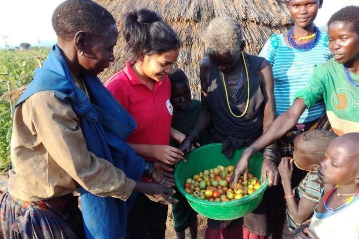Gruppe mit Tomatenernte