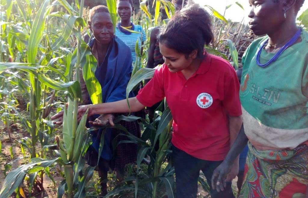 DRK-Mitarbeiterin begutachtet Maispflanzen