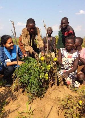 Gruppe mit Tomatenpflanzen