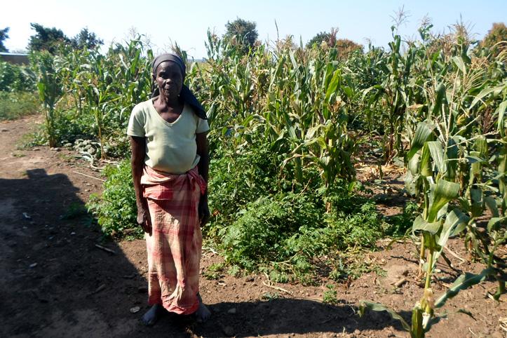 Foto: Mosambikanerin vor ihren Maispflanzen
