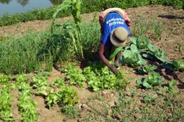 Foto: Mosambikanerin arbeitet in ihrem Garten