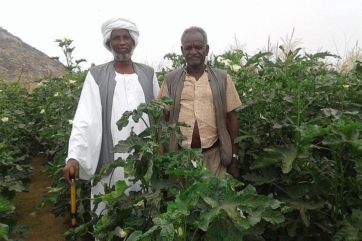 Zwei Bauern mit Okrapflanzen