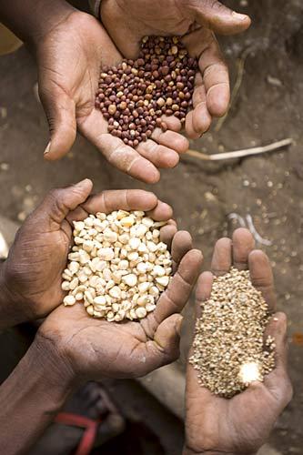 drei Hände mit Samenkörnern