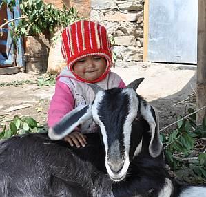 Kind mit Ziege in Nepal
