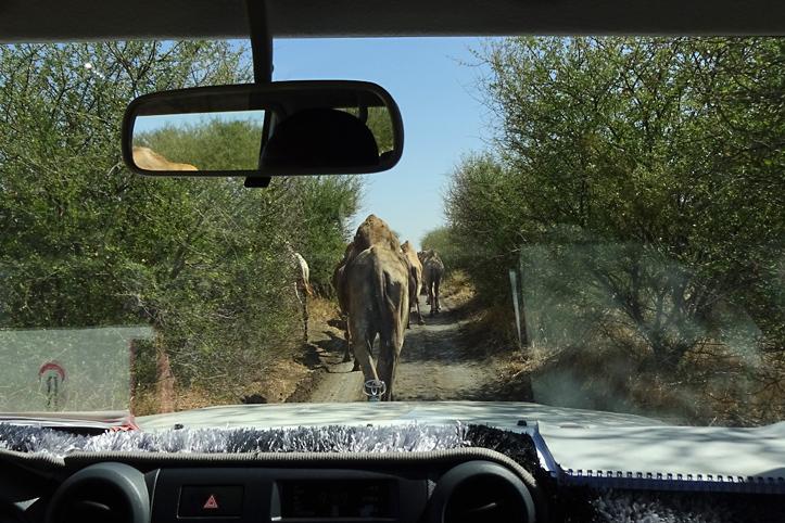 Foto: Blick aus einem Auto auf einen Weg mit Elefanten