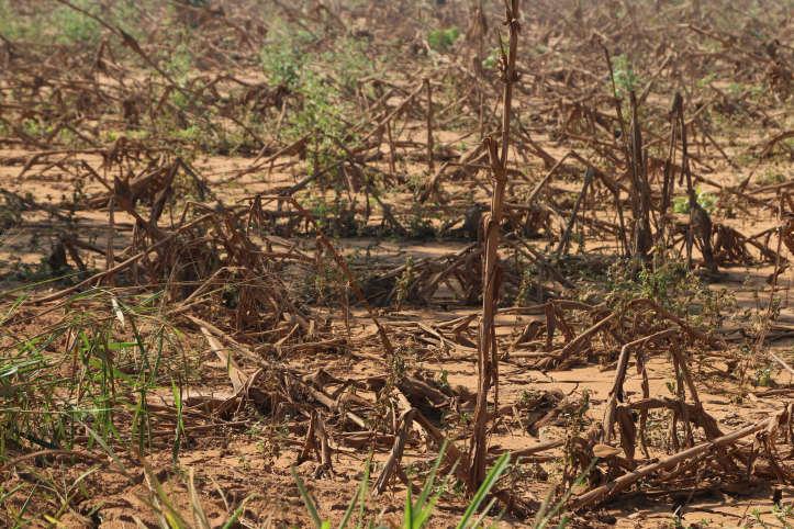 Zerstörtes Feld nach Zyklon Idai in Mosambik