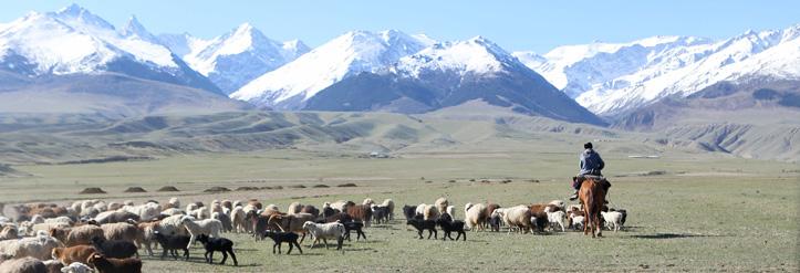 Foto: Landschaft in Kirgistan mit Kuhherde