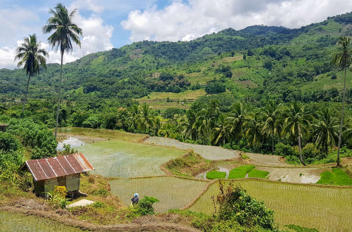 rice fields and hills in the Pilippines