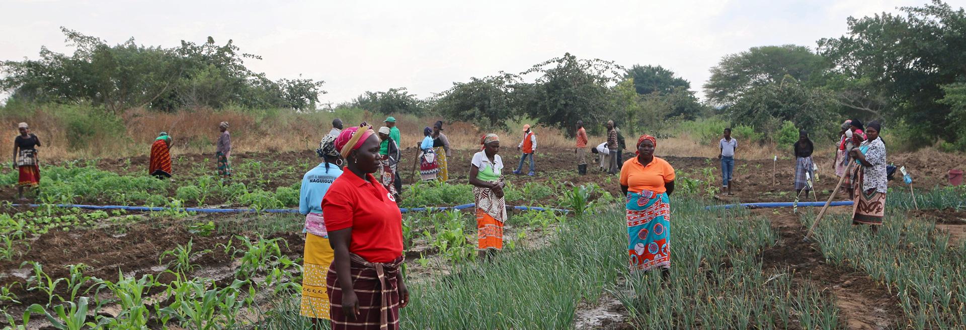 Frauen arbeiten auf einem Feld in Mosambik