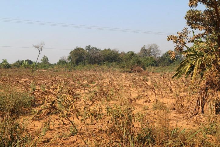 Durch Sturm Idai zerstörtes Maisfeld in Dombe