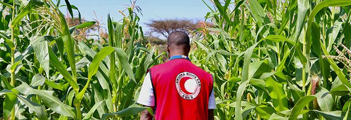 Somalischer Rothalbmond-Helfer in Maisfeld